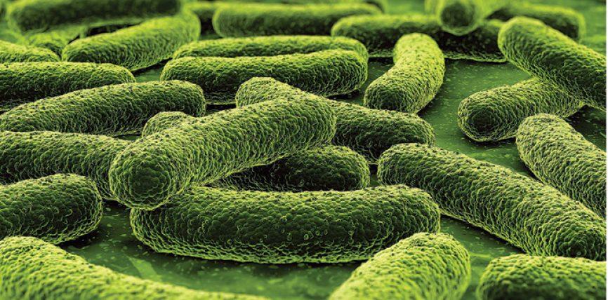 Cilët janë simptomat e tuberkulozit?