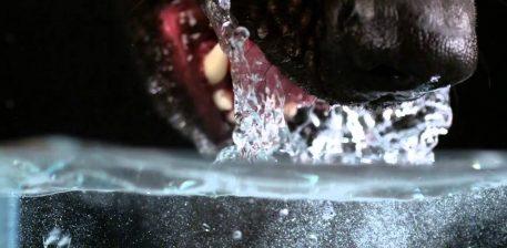 """Për çdo krijesë të gjallë keni shpërblim, (kur i jepni ujë, kur e ushqeni dhe kur silleni mire me to)."""""""