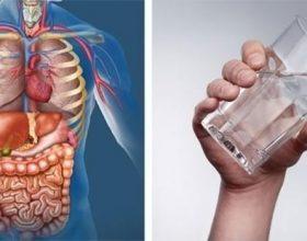 A e dini se çfarë ndodh kur pini ujë në stomak bosh?