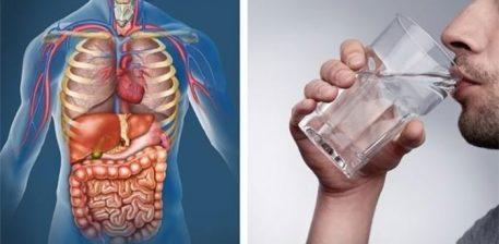 Pse të pimë ujin ulur, ç'rëndësi ka?