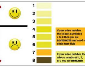 Çfarë tregon urina për shëndetin tuaj ?