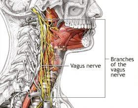 Uji i ftohtë e vret nervin vagus