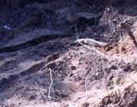 Varrezë masive në Svircë të Medvegjës?