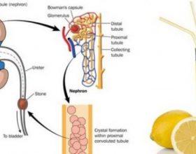 """Gurët në veshka, kombinimi """"thërrmues"""" i padëgjuar me limon dhe vezë"""