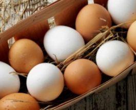 E vërteta e hidhur e vezëve që blini në dyqan
