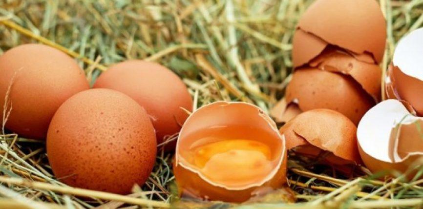 Gjashtë fakte për vezët