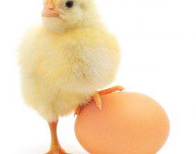 Mësoni pesë arsyet përse duhet të hani më shumë vezë