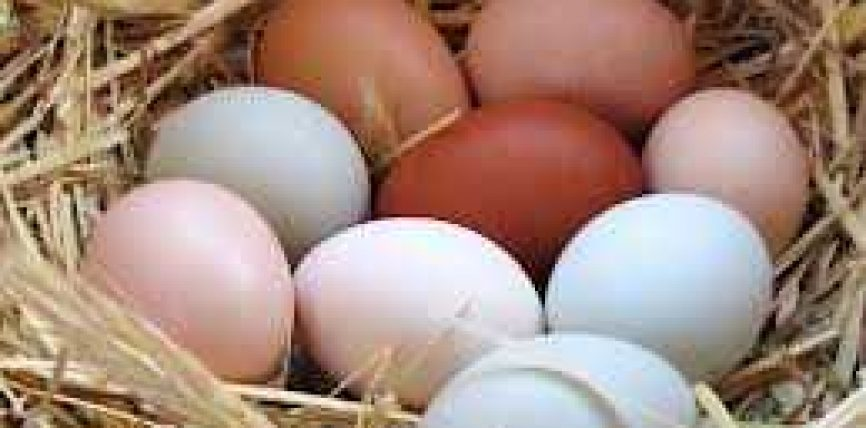 7 Dobi shëndetsore te vezëve