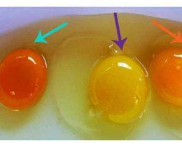 Si ta kuptoni nëse vezët vijnë nga një pulë e sëmurë? Disa mënyra për t'i dalluar ato të shëndetshmet
