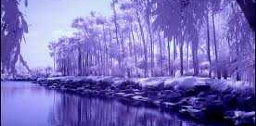 Pershkrimi i disa pemeve te Xhennetit