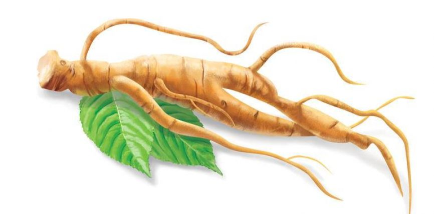 Xhenseni është bima e cila në mjekësinë kineze me shekuj përdoret si afrodiziak