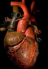 Shtypja e zemrës