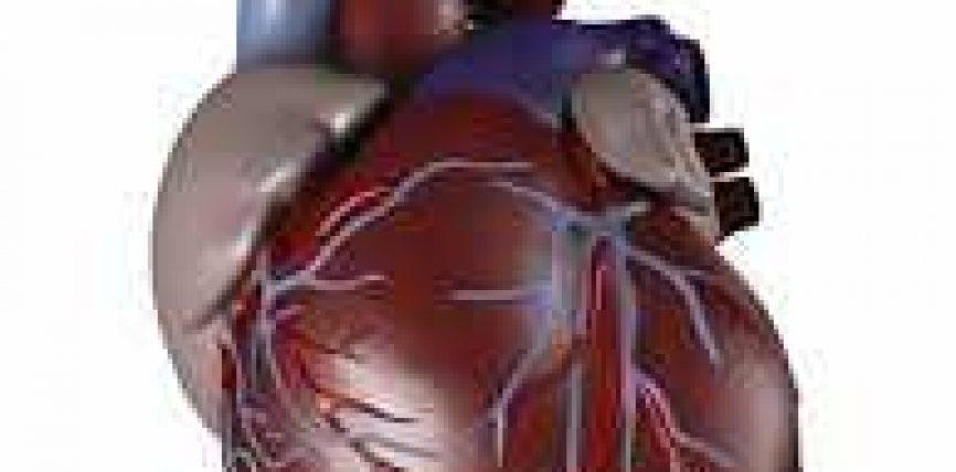 Zemra jonë organ i jashtzakonshëm!