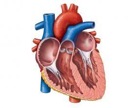 Pastrimi i zemrës