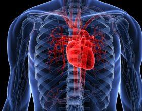 Cila është zemra më e mirë?