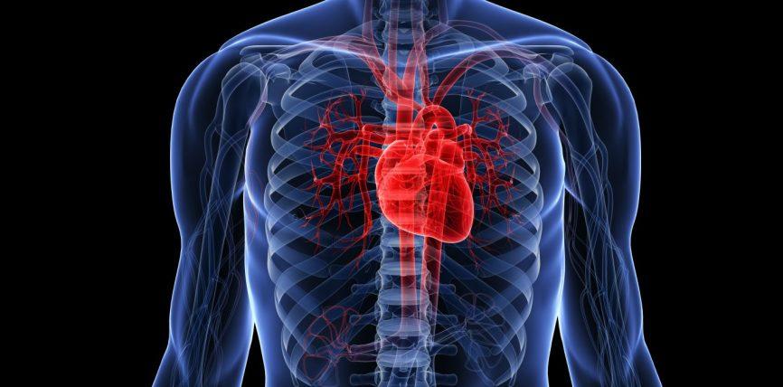 Zemra jonë është pompa më precize në botë