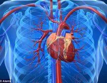 Zemra dhe ngushtimi i damarëve të gjakut