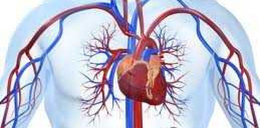 Për shërimin e zemrës dhe qarkullimit të gjakut