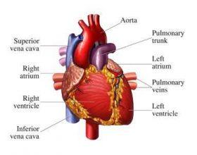 27 ditë për një zemër të shëndoshë