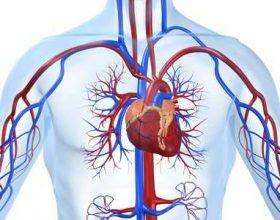 Shëndeti i zemrës dhe sëmundja e saj ndikojnë në shëndetin e trupit dhe sëmundjen e tij