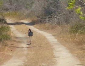A e dini se ky zog e mbulon fytyren kur pi uje ?